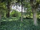 Trees | 1/100 sec | f/3.9 | 5.0 mm | ISO 200