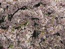 Blossom | 1/250 sec | f/5.6 | 25.5 mm | ISO 80