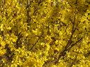 Yellow | 1/320 sec | f/5.6 | 42.9 mm | ISO 80
