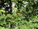 Full Zoom Berries | 1/160 sec | f/6.8 | 193.5 mm | ISO 100