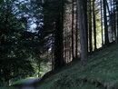 "Trees (-2 EV)   1/50 sec   f/4.0   9.3 mm   ISO 400   <a target=""_blank"" href=""https://www.magezinepublishing.com/equipment/images/equipment/Powershot-SX530-HS-5682/highres/Canon-Powershot-SX530HS-Trees-IMG_0077_1444651235.jpg"">High-Res</a>"