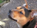 Pet Portrait | 1/80 sec | f/5.6 | 24.9 mm | ISO 400
