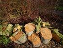 Freshly Sawn Logs | 1/320 sec | 8.5 mm | ISO 400
