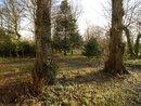 Woodland | 1/13 sec | 8.5 mm | ISO 200