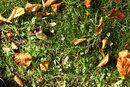 Autumn | 1/30 sec | f/11.0 | 105.0 mm | ISO 200