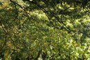 Canopy Of Leaves | 1/50 sec | f/8.0 | 105.0 mm | ISO 200