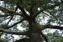 Treescape | 1/30 sec | f/8.0 | 98.0 mm | ISO 200