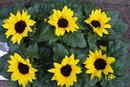 Six Flowers | 1/80 sec | f/8.0 | 50.0 mm | ISO 200