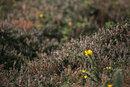 Wild Flower | 1/640 sec | f/6.3 | 600.0 mm | ISO 400