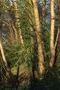 "Tamron 90mm F2,8 Sunlit Trees | 1/125 sec | f/8.0 | 90.0 mm | ISO 200 | <a target=""_blank"" href=""https://www.magezinepublishing.com/equipment/images/equipment/SP-90mm-f28-MACRO-11-Di-VC-USD-F017-6047/highres/tamron_90mm_f28_sunlit_trees_1461764478.jpg"">High-Res</a>"