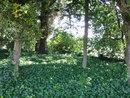 "Trees | 1/50 sec | f/3.2 | 4.7 mm | ISO 100 | <a target=""_blank"" href=""https://www.magezinepublishing.com/equipment/images/equipment/SP720UZ-3764/highres/olympus-sp-720uz-trees_1342970313.jpg"">High-Res</a>"