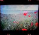 Lomo Film Scanner Nokia Pureview 925
