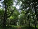 Trees | 1/160 sec | f/3.0 | 4.5 mm | ISO 125