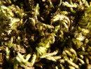 Macro Close Moss | 1/250 sec | f/5.2 | 8.7 mm | ISO 200