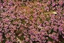 Lavender | 1/200 sec | 50.0 mm | ISO 400