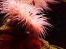 Underwater Anenome | 1/30 sec | f/2.3 | 5.4 mm | ISO 800