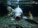 Fish! | 1/60 sec | f/2.0 | 4.5 mm | ISO 160