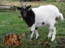 Goat Zoom | 1/60 sec | f/5.3 | 20.3 mm | ISO 100