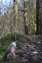 Dog Walk | 1/500 sec | ISO 100
