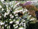 Bee Macro   1/750 sec   f/3.1   4.3 mm   ISO 80
