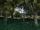 Trees   1/90 sec   f/4.0   4.1 mm   ISO 100