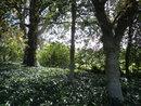 "Trees | 1/125 sec | f/3.5 | 5.0 mm | ISO 80 | <a target=""_blank"" href=""https://www.magezinepublishing.com/equipment/images/equipment/WG10-5079/highres/pentax-wg-10-trees_1368525446.jpg"">High-Res</a>"