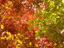 Colour Change   1/125 sec   f/4.9   18.0 mm   ISO 250