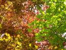 Leaves   1/125 sec   f/4.9   18.0 mm   ISO 250