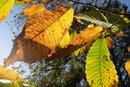 Leaves | 1/400 sec | f/10.0 | 23.0 mm | ISO 400
