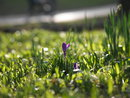 Purple flower 135mm - JPEG straight from camera | 1/200 sec | f/4.5 | 135.0 mm | ISO 100
