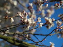 Blossom 65mm - JPEG straight from camera | 1/250 sec | f/5.0 | 65.0 mm | ISO 100