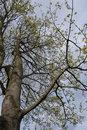 (Pre-production sample photo) Tree | 1/1100 sec | f/6.4 | 18.0 mm | ISO 320