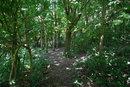 Woodland | 1/15 sec | f/5.6 | 18.0 mm | ISO 400