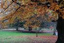 Autumn Landscape | 1/90 sec | f/2.8 | 35.0 mm | ISO 200
