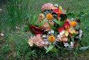 Fujinon Xf 50mm F2 Abandoned Flowers   1/20 sec   f/11.0   50.0 mm   ISO 200