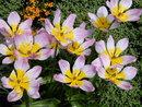 Flowers | 1/750 sec | f/4.7 | 16.0 mm | ISO 100
