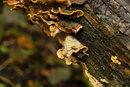 Fungi2 Pre-production | 1/80 sec | f/4.0 | 55.0 mm | ISO 5000