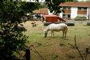 White Pony (35mm f/2)   1/420 sec   f/4.0   35.0 mm   ISO 200