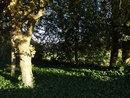 Trees | 1/320 sec | f/2.5 | 6.0 mm | ISO 100
