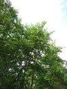 "Tree | <a target=""_blank"" href=""https://www.magezinepublishing.com/equipment/images/equipment/Xperia-1-II-7556/highres/DSC_0040_1593526249.jpg"">High-Res</a>"