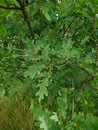 "Tree | <a target=""_blank"" href=""https://www.magezinepublishing.com/equipment/images/equipment/Xperia-1-II-7556/highres/DSC_0047_1593526292.jpg"">High-Res</a>"