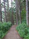 "Path | <a target=""_blank"" href=""https://www.magezinepublishing.com/equipment/images/equipment/Xperia-1-II-7556/highres/DSC_0071_1593526540.jpg"">High-Res</a>"