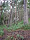 "Landscape | <a target=""_blank"" href=""https://www.magezinepublishing.com/equipment/images/equipment/Xperia-1-II-7556/highres/DSC_0076_1593526569.jpg"">High-Res</a>"