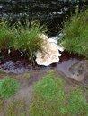"River | <a target=""_blank"" href=""https://www.magezinepublishing.com/equipment/images/equipment/Xperia-1-II-7556/highres/DSC_0084_1593526643.jpg"">High-Res</a>"