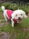 "Dog | <a target=""_blank"" href=""https://www.magezinepublishing.com/equipment/images/equipment/Xperia-1-II-7556/highres/DSC_0086_1593526666.jpg"">High-Res</a>"