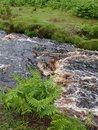 "River | <a target=""_blank"" href=""https://www.magezinepublishing.com/equipment/images/equipment/Xperia-1-II-7556/highres/DSC_0097_1593526400.jpg"">High-Res</a>"