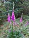 "Flowers | <a target=""_blank"" href=""https://www.magezinepublishing.com/equipment/images/equipment/Xperia-1-II-7556/highres/DSC_0100_1593526411.jpg"">High-Res</a>"