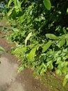 Leaves | 1/1600 sec | f/1.7 | 5.1 mm | ISO 64