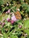 Butterfly | 1/500 sec | f/2.8 | 14.5 mm | ISO 50