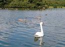 Swan | 1/1250 sec | f/2.3 | 10.2 mm | ISO 50